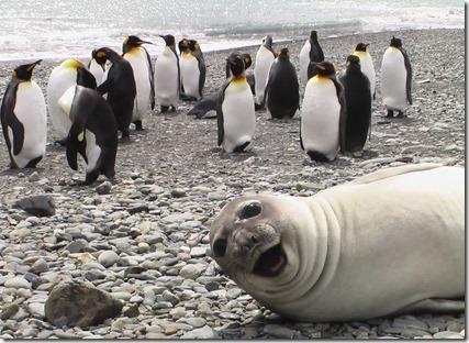Smiling_Seal_